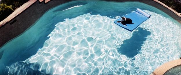 seth taras_dog-pool
