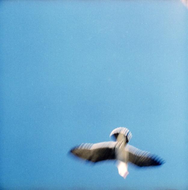 seth taras_seagull-sqaure